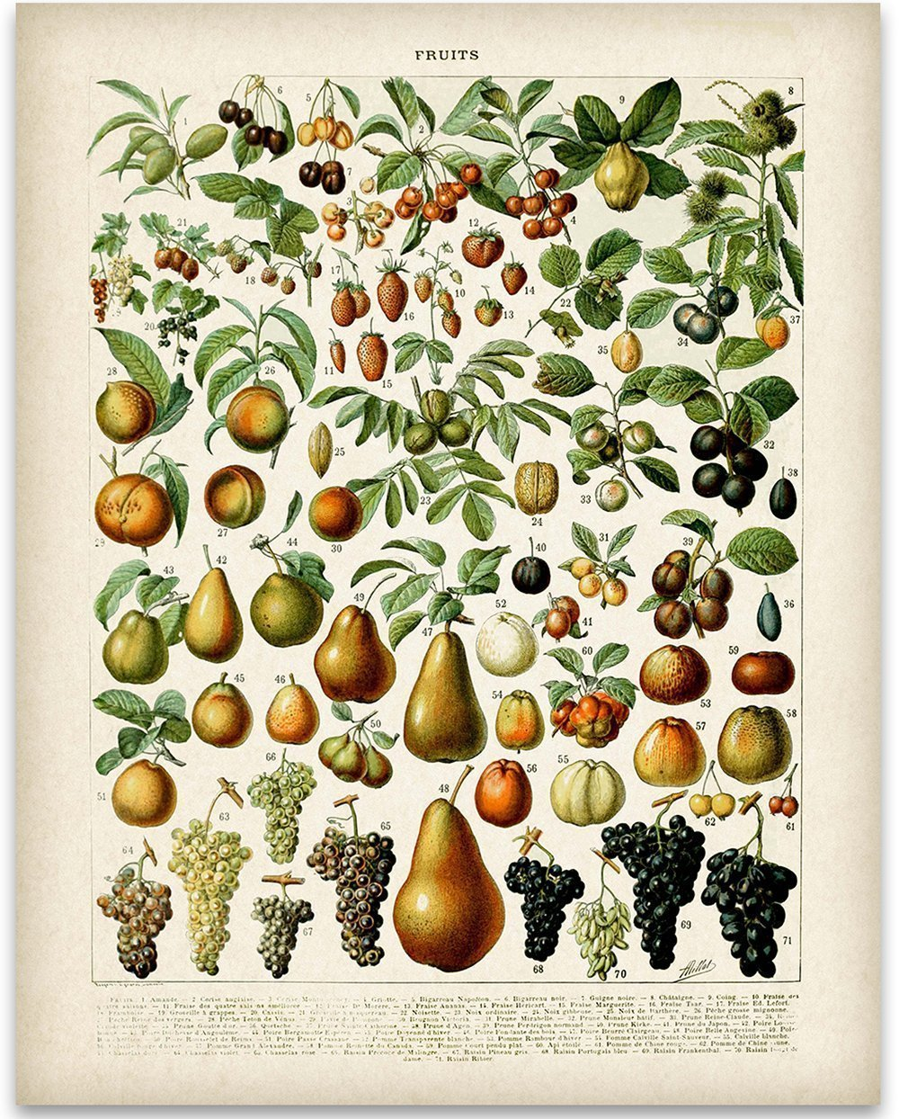 Fruits Botanical in French Art Print - 11x14 Unframed Art Print - Great Wall Decor for Your Kitchen by Personalized Signs by Lone Star Art