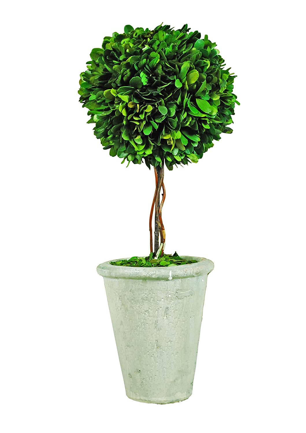 Amazon.com - Galt International Naturally Preserved Real Boxwood Ball  Topiary Plant with Twig Stem and Restoration Style White Pot, 29.5-Inch -  Artificial ...