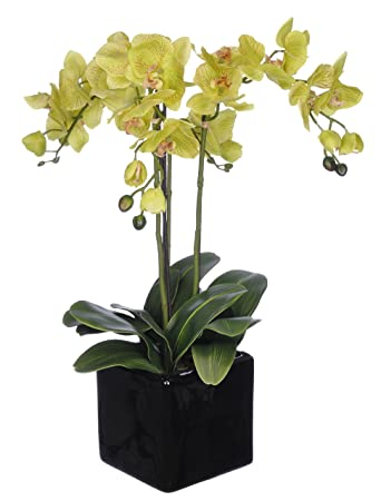 house of silk flowers artificial triplestem orchid arrangement lime green