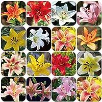 Planta Flor Vegetal Fruta Árbol Semillas 100pcs/Bag Lirio Semillas Sol, No Híbridas 8 Colores Bonsai Lirio Semillas para…