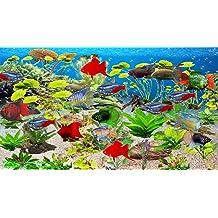Paradise Fish Aquarium [Download]