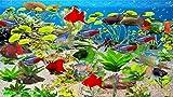 Software : Paradise Fish Aquarium [Download]