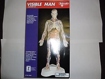 Visible Man Anatomy Kit: Amazon.co.uk: Toys & Games
