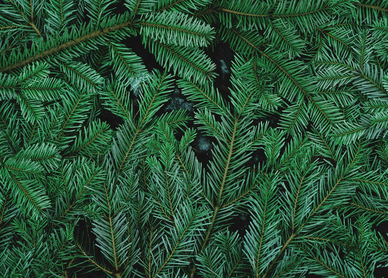 SJOLOON 7X5フィート 緑の葉 パーティー装飾 背景 クリスマスツリー 赤ちゃんの誕生日パーティー 写真背景 新生児 シャワー背景 11310   B07JFWPKRK
