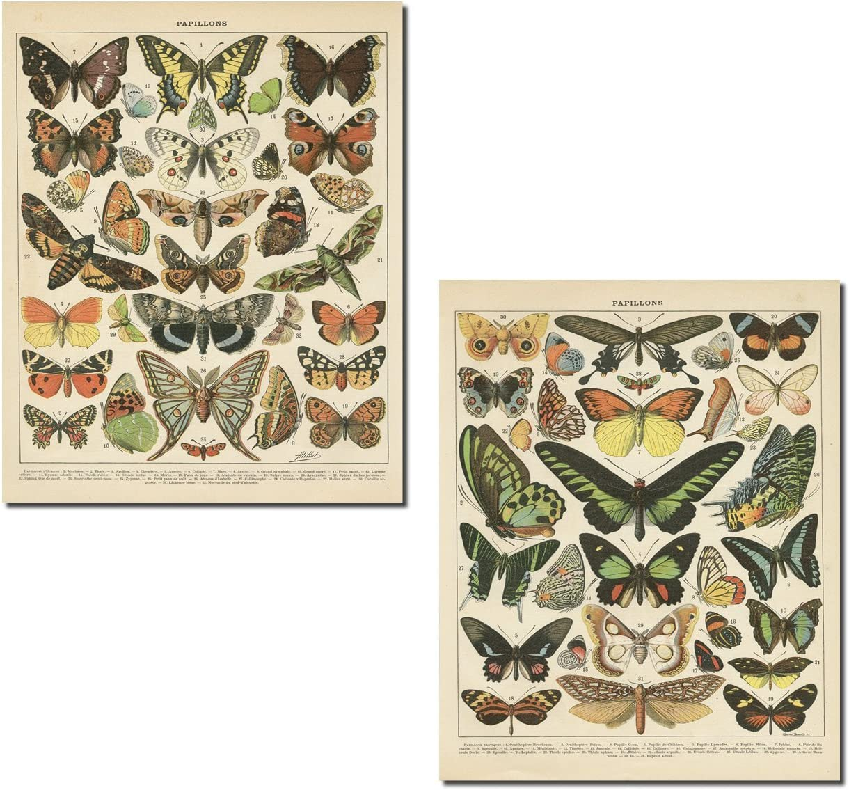 Gango Home Décor Popular Vintage French Types of Papillons Butterflies Set; Two 16x20in Fine Art Giclee Prints