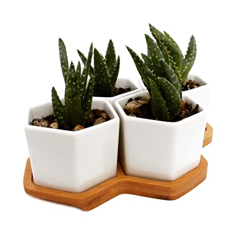 Modern Succulent And Herb Planter, Table Centerpiece, Four Individual  Hexagon Shaped Pots Comes With