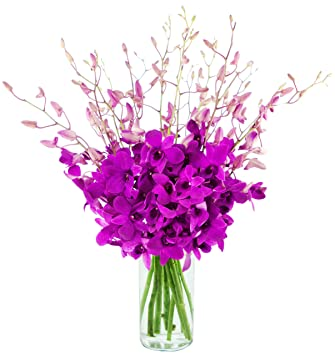 Amazoncom The Ultimate Orchid Bouquet Of Exotic Orchids From