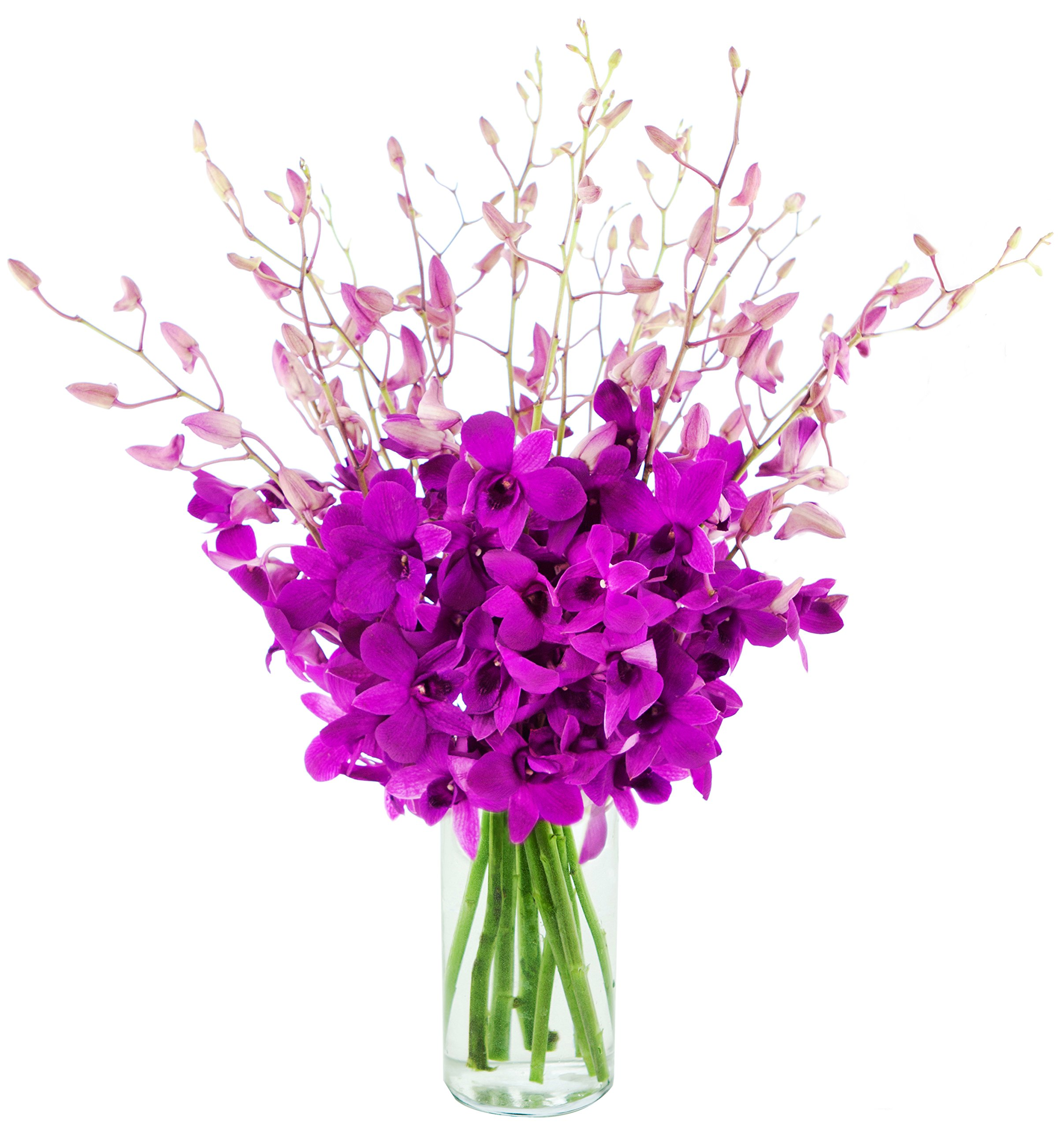 The Ultimate Orchid Bouquet Of Exotic Orchids From Thailand with Free Vase Included, 20 Purple Dendrobium