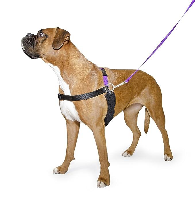 ANCOL Arnés de entrenamiento para perro, talla pequeñ (Incluye DVD ...