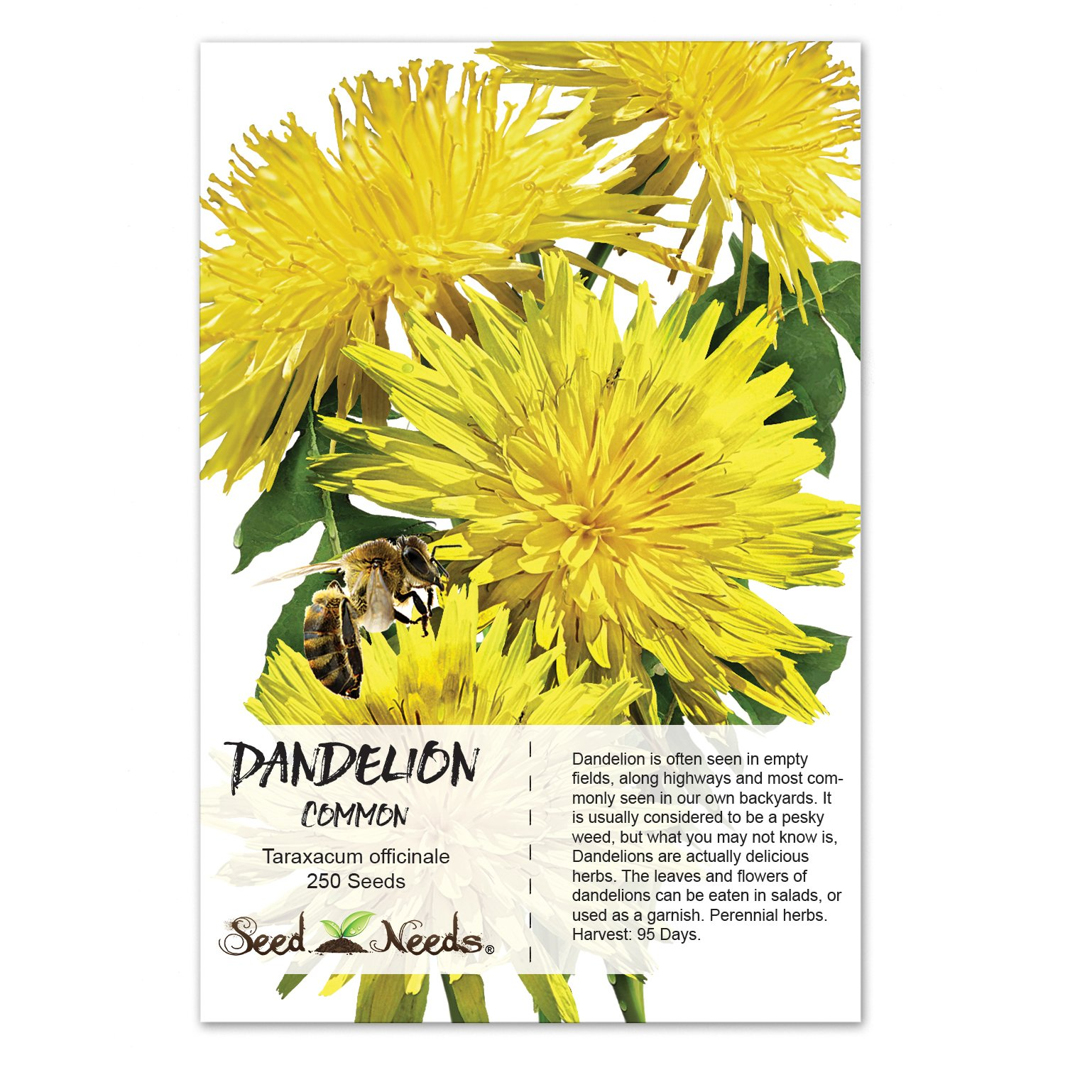 Amazon Package Of 250 Seeds Dandelion Herb Taraxacum