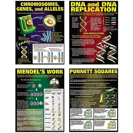 McDonald Publishing DNA Heredity Poster Set