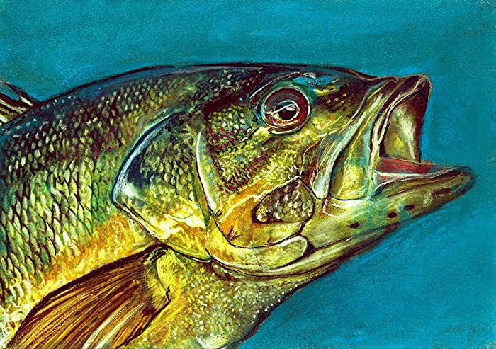 Amazon.com: Largemouth Bass Fishing Wall Art, Bass Fishing Decor ...