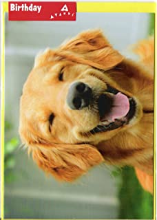 Amazon basset hound wearing sunglasses avanti funny dog smiling golden retriever avanti funny dog birthday card bookmarktalkfo Gallery