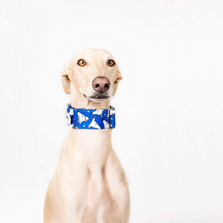 Collar para perros Martingale Caralapiz azul - El galgo azul ...