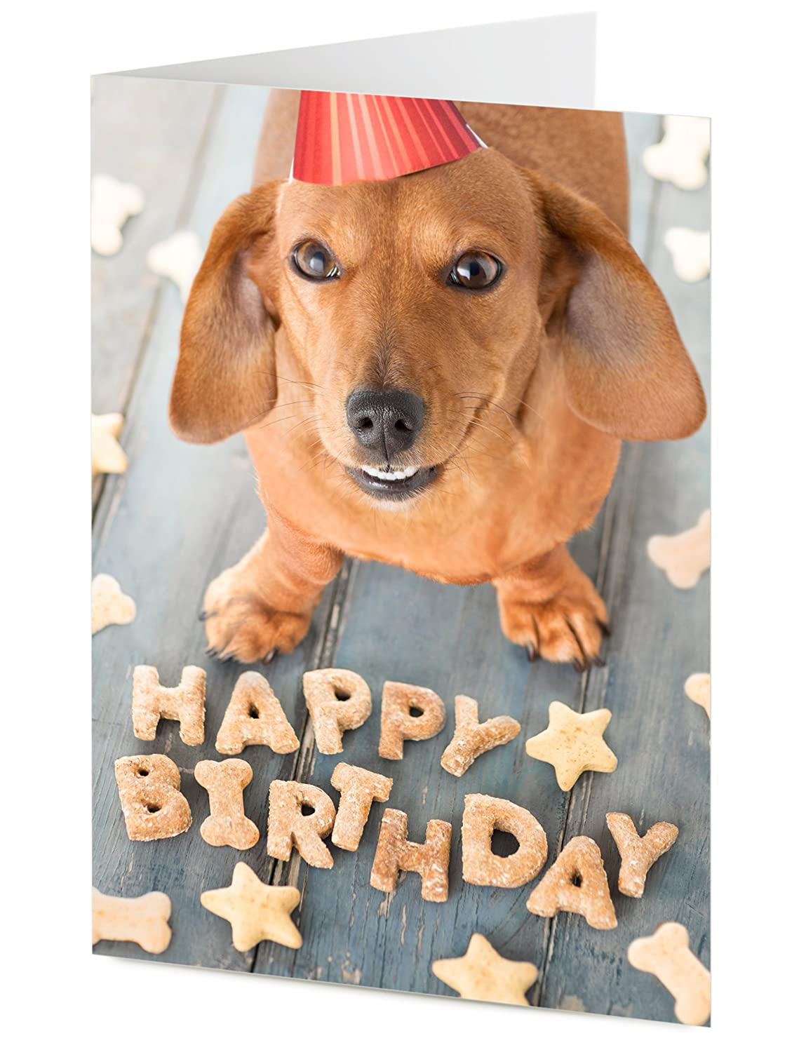 Cute dachshund sausage dog arranges doggy treats to say happy cute dachshund sausage dog arranges doggy treats to say happy birthday birthday card amazon office products kristyandbryce Choice Image