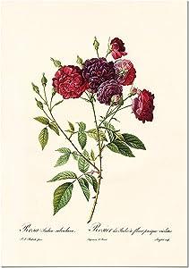 Panorama Póster Rosa Borgoña Vintage 21x30cm - Impreso en Papel 250gr - Láminas Hojas Verdes - Láminas para Enmarcar - Cuadros Decoración Salón - Cuadros Botánica - Cuadros de Plantas