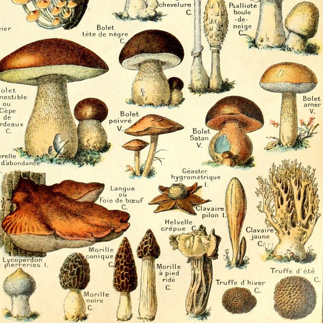 Meishe Art Jahrgang Plakate Drucken Plakatdruck Pilze Champignons Identifizierung Bezug Abbildung Illustrationen Botanische P/ädagogische Wand Dekor 12.99 x 19.69