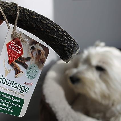 Chronobalance Geweih Kaustange S Halbiert Fur Hunde 100 Hirschgeweih Kauspielzeug Zahnpflege Kausnack Geweih Kauknochen Amazon De Haustier
