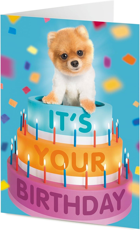 Pleasing Its Your Birthday Pomeranian Puppy Dog Emerges From Giant Funny Birthday Cards Online Alyptdamsfinfo