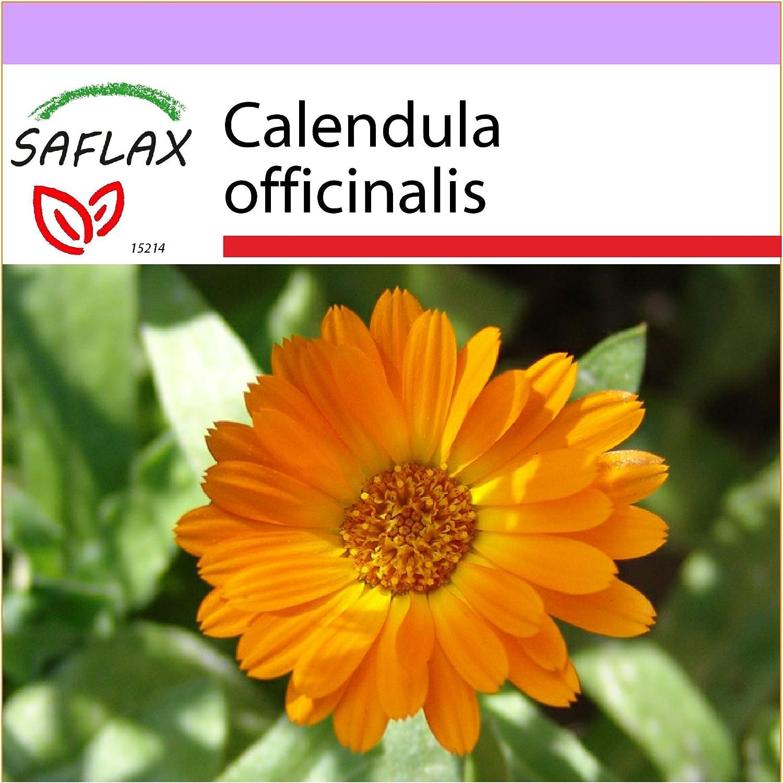 SAFLAX - Botón de oro - 50 semillas - Calendula officinalis