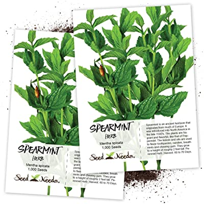 Seed Needs, Spearmint Herb (Mentha spicata) Twin Pack of 1, 000 Seeds Each Non-GMO : Herb Plants : Garden & Outdoor
