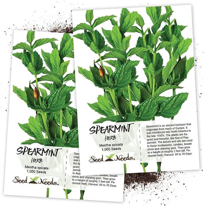 +500 SPEARMINT SEEDS Mentha spicata Mint Tea NonGMO
