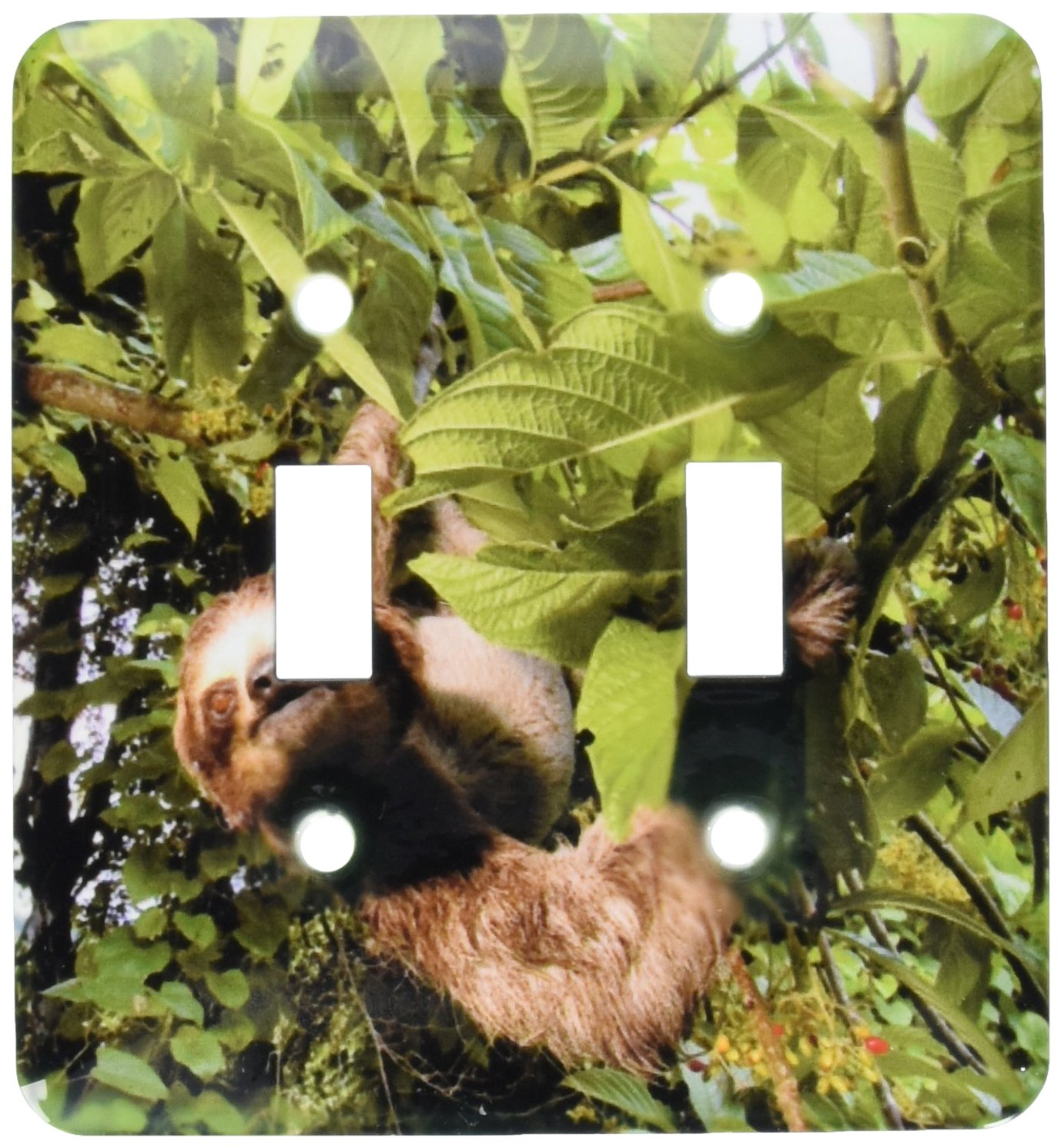 3dRose lsp_86913_2 Panama, Panama City, Three-Toed Sloth Wildlife Sa15 Czi0561 Christian Ziegler Double Toggle Switch