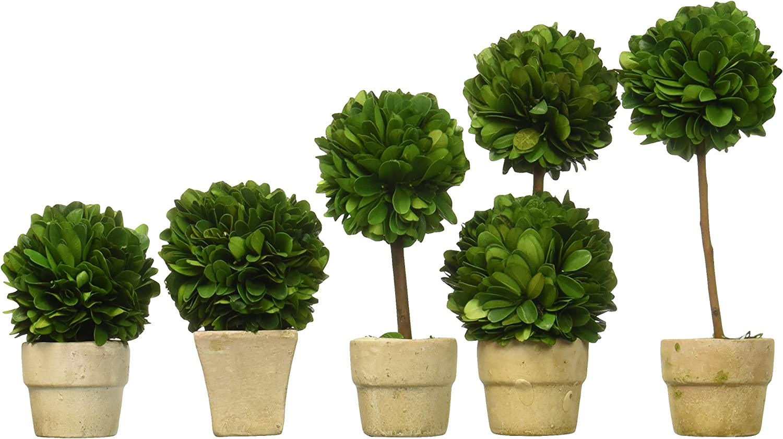 Amazon Com Preserved Boxwood Topiaries Mini Set Of 5 Garden