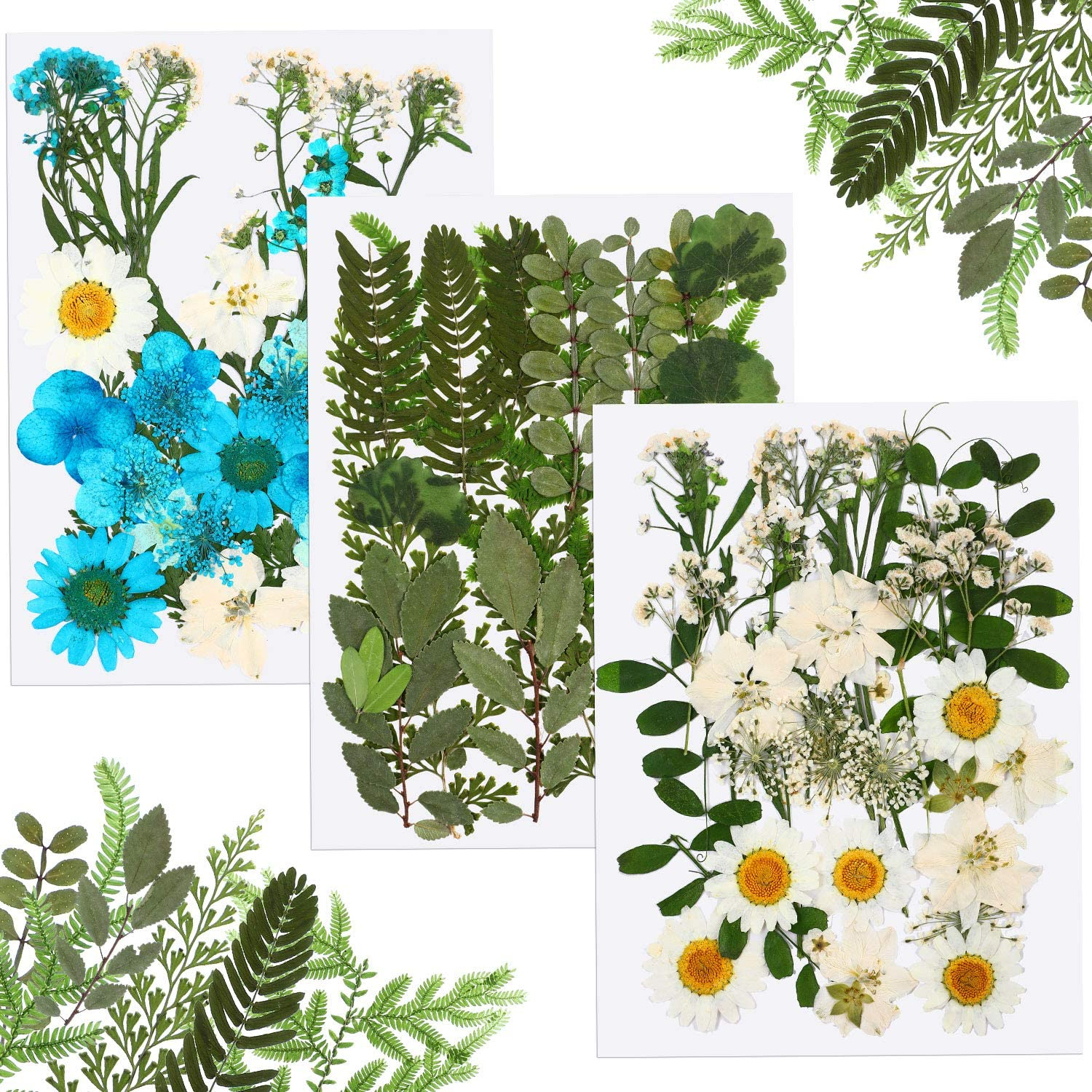 57 Pieces Real Dried Pressed Flowers Assorted Real Dried Pressed Leaves Natural Dry Leaves for Pressed Leaf Art Craft DIY Embellishment Decorations 29 Styles