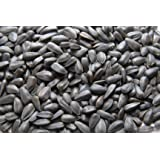CountryMax Black Oil Sunflower Seed for Wild Birds 50 LBS
