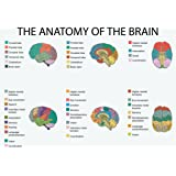 Anatomy Of The Brain Education Poster. Many Sizes Available, Including Frames.