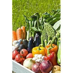 【農家さん直送】家庭で使いやすい高知県産無農薬 季節の野菜セット7品(2人用)