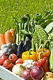 ただ安いだけでいいですか?【農家さん直送】野菜ソムリエ宮崎ノゾミの家庭で使いやすい高知県産無農薬 季節の野菜セット(10品)