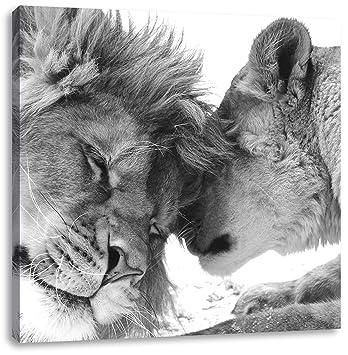 Bezauberndes Kuschelndes Löwenpaar Schwarz Weiß Format