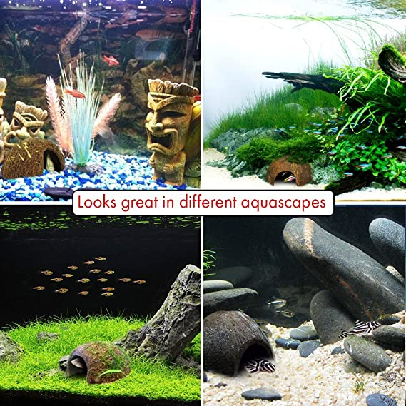 Luffy Coco Hut - perfecto Hideaway para acuarios mascotas hámster peces Betta Pleco araña de Exo Terra Reptil: Amazon.es: Productos para mascotas