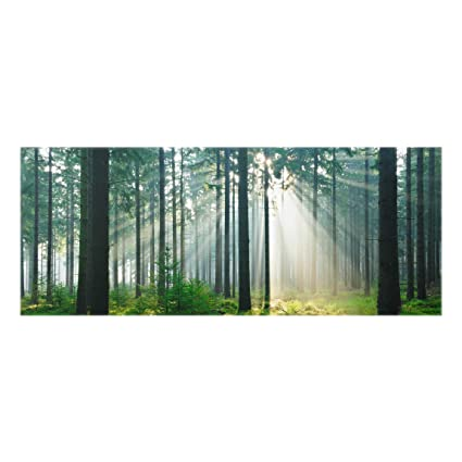 Bilderwelten Paraschizzi in vetro - Enlightened Forest - Panoramico ...
