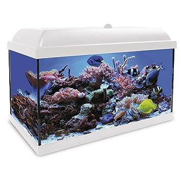 ICA KHS45B Kit Hydra 45 para Agua Salada: Amazon.es: Productos para mascotas