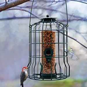 FORUP Caged Tube Feeder, Squirrel Proof Wild Bird Feeder, Outdoor Birdfeeder with Large Metal Seed Guard Deterrent for Large Birds, Green