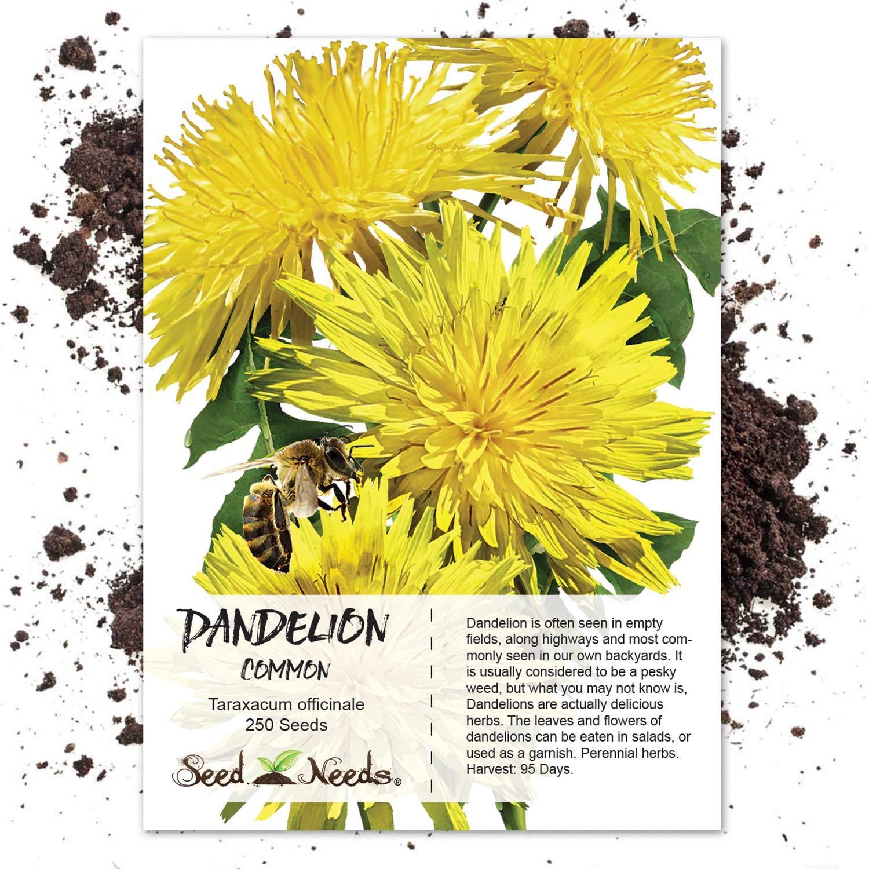 amazon com package of 250 seeds dandelion herb taraxacum
