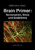 Brain Primer: Nervenzellen, Sinne und Gedächtnis