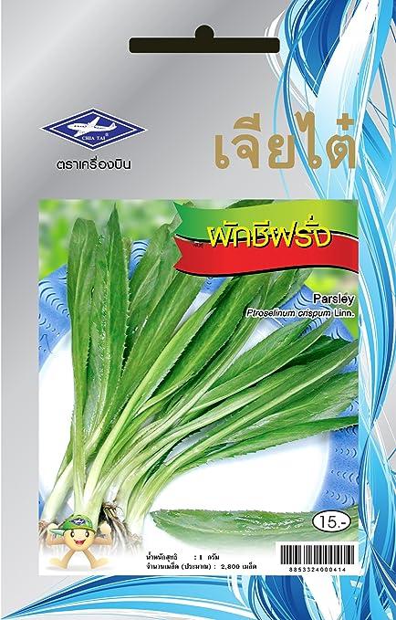 Amazon.com: Chia Tai Perejil Semillas de Tailandia, Thai ...