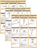 Bodyweight Strength Training Anatomy Poster Series