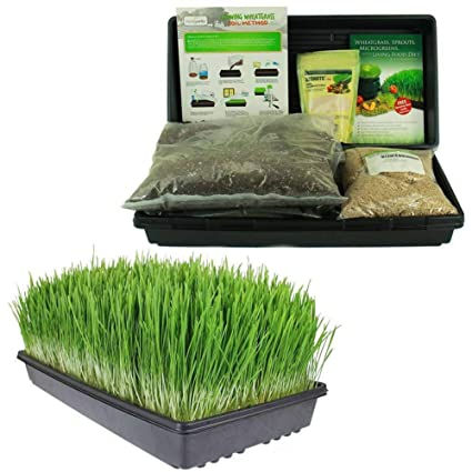 Living Whole Foods Certified Organic Wheatgrass Growing Kit Grow Juice Wheat Grass Trays Seed Soil Instructions Wheatgrass Book Trace