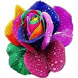 Cravog Vivaces Belle Floraison 500 Pcs Rose Graines Arc-en-ciel Couleurs
