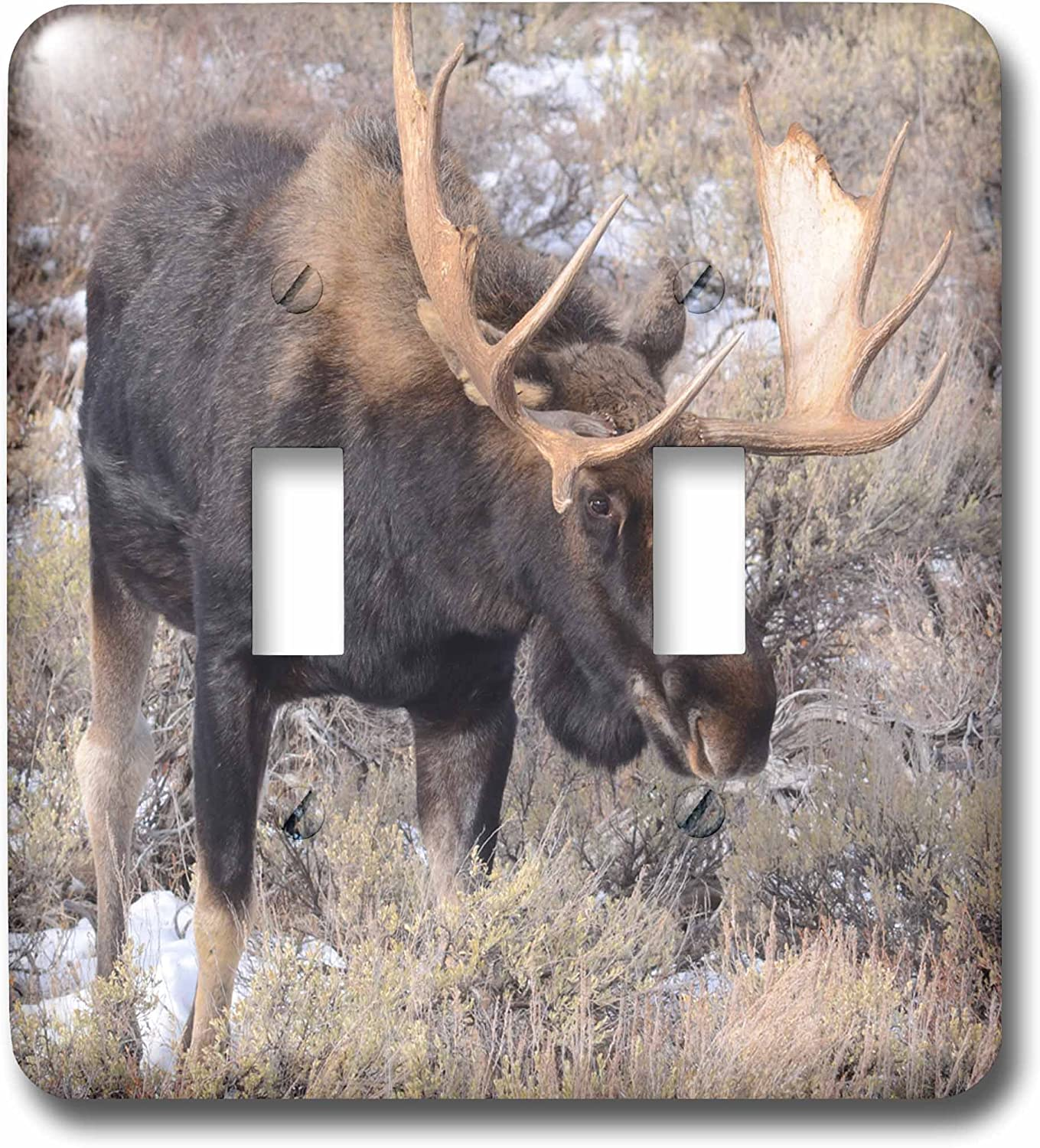 3drose Lsp 208030 2 Bull Moose In Field With Cottonwood Trees Grand Teton Np Wyoming Double Toggle Switch Amazon Com