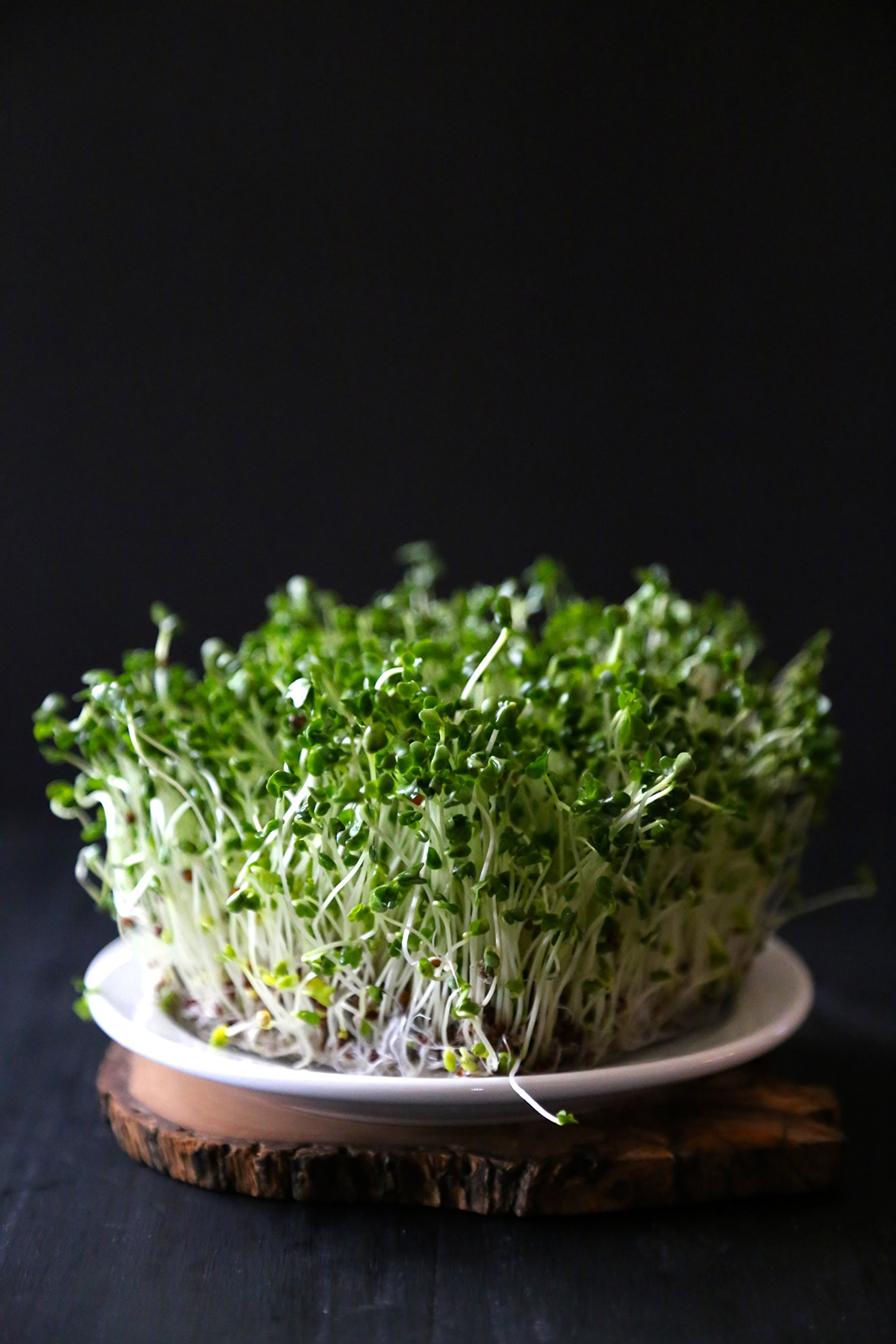 Certified Non-GMO Broccoli Seeds For Sprouting Sprouts Microgreens (4oz (20000+seeds))