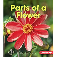 Parts of a Flower (First Step Nonfiction) (First Step Nonfiction - Pollination)