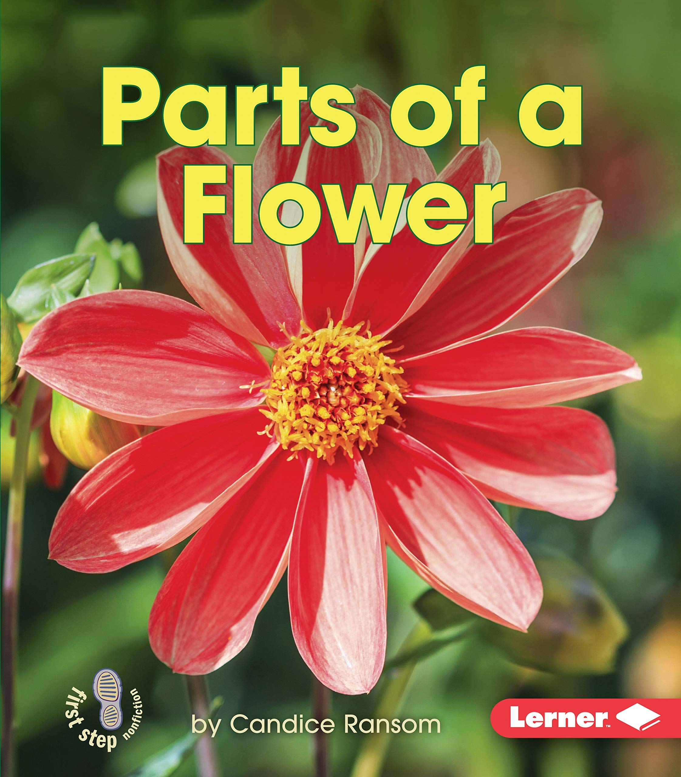 Parts of a flower first step nonfiction first step nonfiction parts of a flower first step nonfiction first step nonfiction pollination candice f ransom 9781467760706 amazon books izmirmasajfo