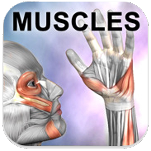 Learn Muscles: Anatomy is the Free App of the Day