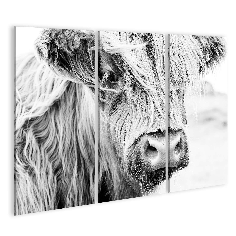 Wandbild Acrylglasbild Glasbild URF islandburner Bild auf Acrylglas Schottische Kuh im gr/ünen Gras